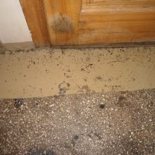 Parazitai: tarakonai laksto ne tik po laiptinę, bet skverbiasi ir į kitų gyventojų butus.