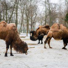 Kaip už 11 mln. eurų pasikeis Lietuvos zoologijos sodas?