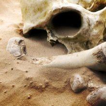 Vilniaus rajone rasta žmogaus kaukolė
