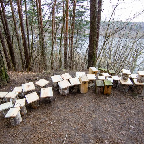 Grįžtantiems paukščiams – nauji inkilai  © I. Gelūno / Fotobanko nuotr.