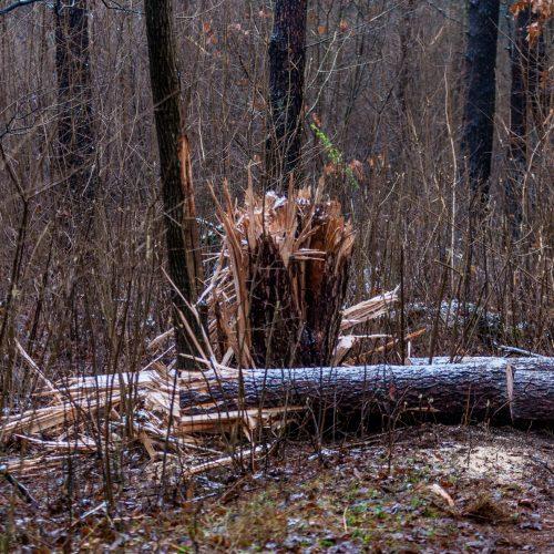 Dėl sprogmens Kleboniškio miške – tarnybų sujudimas  © Laimio Steponavičiaus nuotr.