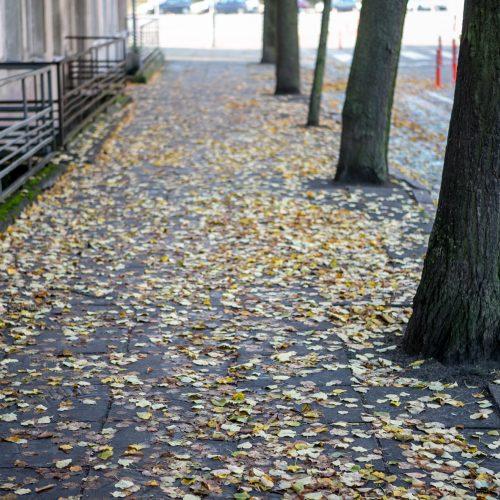 Rudeniniai lapai nuklojo Kauną  ©