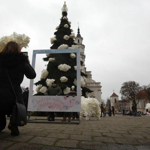 Kauno eglutė laukia įžiebimo šventės  © Laimučio Brundzos nuotr.