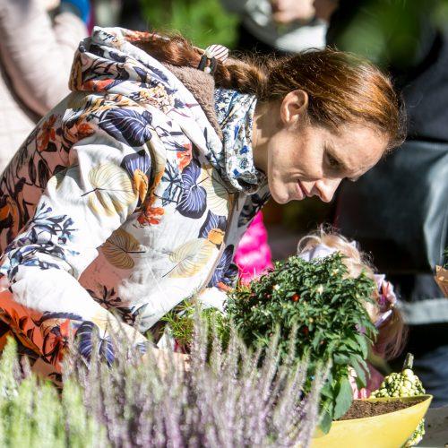 """Renginių diena Akademijoje """"Auginam Obelynę""""  © Vilmanto Raupelio nuotr."""