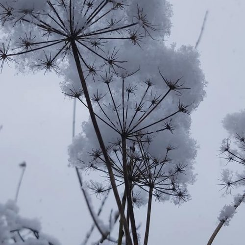 Pirmojo sniego vaizdai Lietuvoje  © Feisbuko grupės