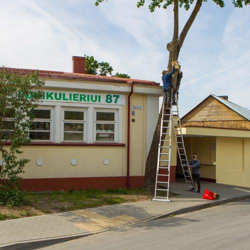 Nauji Kauno akcentai – inkilai  © Laimio Steponavičiaus nuotr.