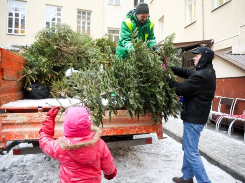 Eglučių surinkimo tvarka Klaipėdos mieste
