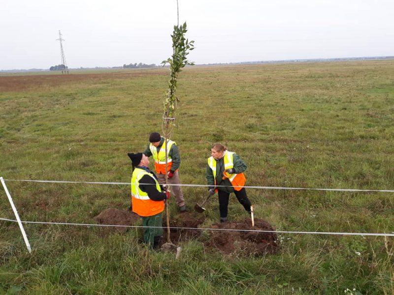 Prasidėjo paskutinis Rusnės kelio rekonstrukcijos etapas: sodina 314 medžių