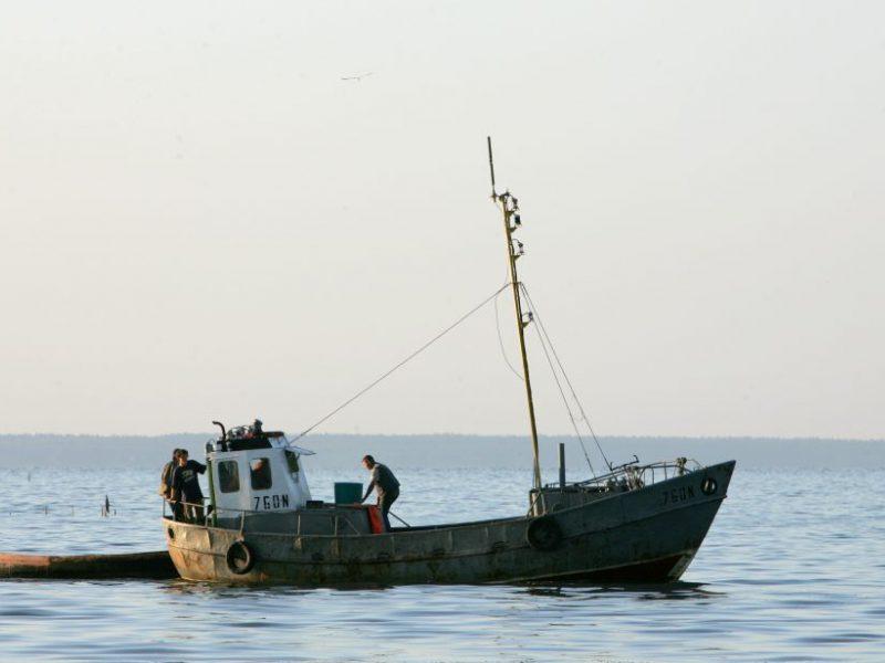 Sujudo ir visuomenininkai: ragina Kuršių mariose riboti verslinę žvejybą