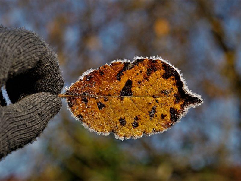 Orai: prireiks šiltesnių drabužių – Lietuvos link plūsta šaltis