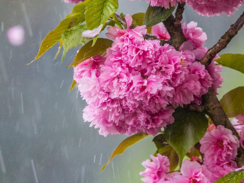Orai: savaitgaliui sinoptikai gerų žinių neturi – bus vėsu ir vėjuota