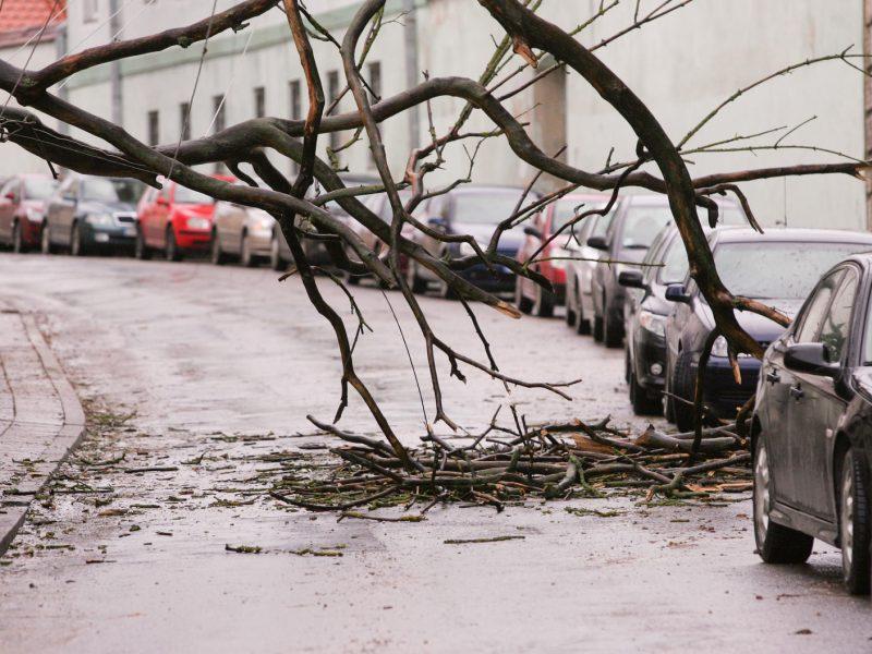 Kelininkai įspėja: keliuose po vėjo gūsių gali būti nuvirtusių medžių ar šakų