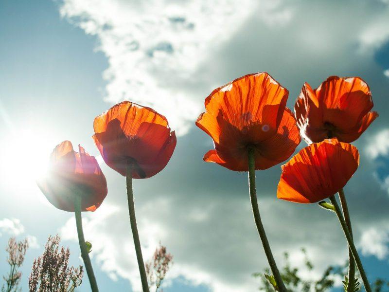 Orai: pagaliau džiaugsimės saule ir šiluma