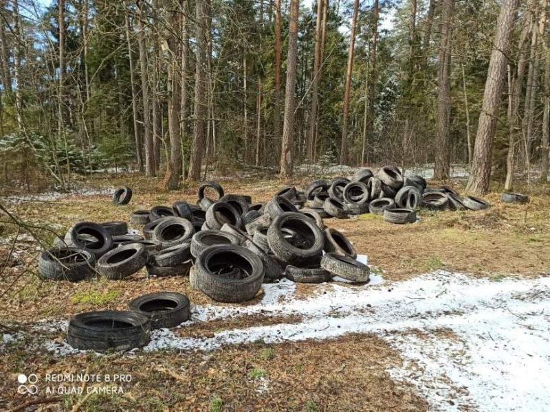 Padangų keitimo sezonas – iššūkis miškininkams: jau renka kalnus padangų