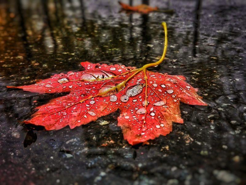 Atsisveikiname su šiltais orais: pasiruoškite monotoniškam rudens lietui