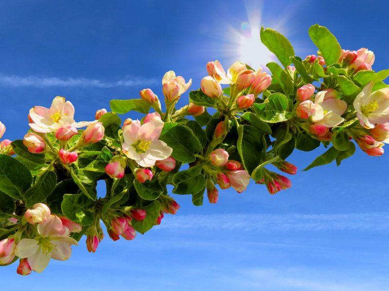 Savaitgalio pradžia padovanos šiltus ir saulėtus orus