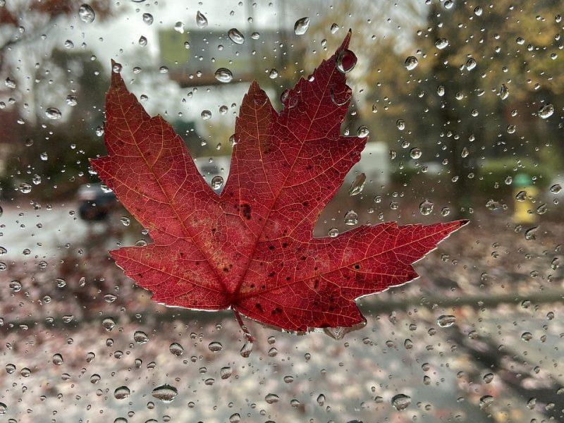 Šiltų orų pasaka baigiasi: savaitgalį atvės ir reikės skėčių