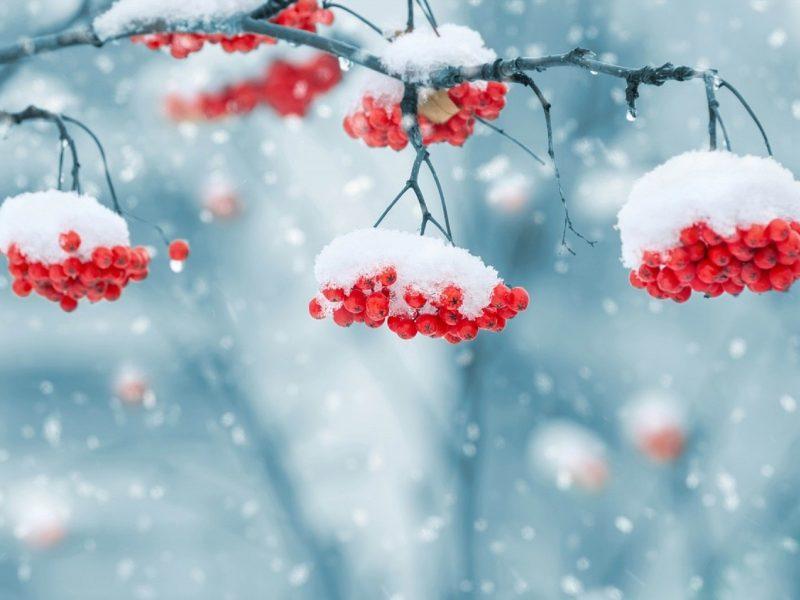 Orai: žiema nosį kyštels tik trumpam