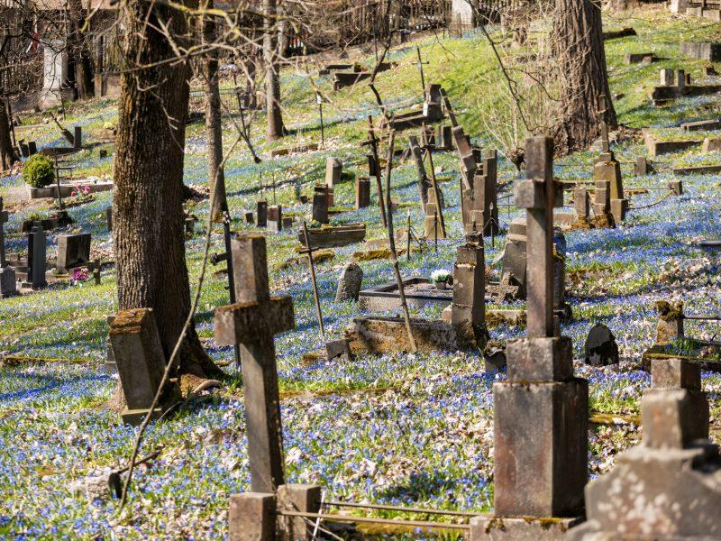 Bus tvarkomos nuo gamtos stichijų nukentėjusios Bernardinų kapinės
