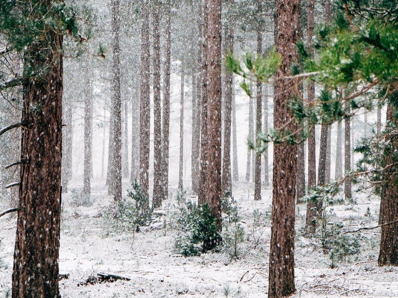 Aplinkos ministerija: dėl ribojimų įsigyti mišką Lietuvai gresia ES sankcijos