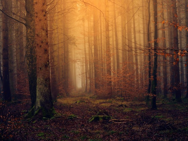 Lenkai vėl galės lankytis parkuose ir miškuose