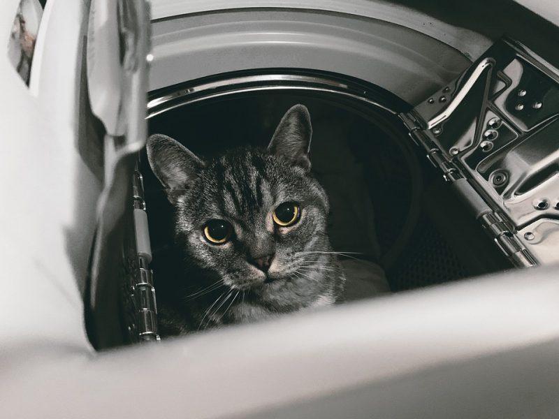 Katę skalbinių džiovyklėje nugalabijusiam vyrui skirta įkalinimo bausmė