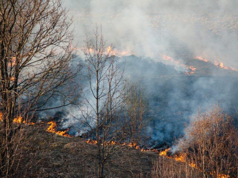 Plinta miško gaisras Mažeikių rajone: svarstoma pasitelkti sraigtasparnį