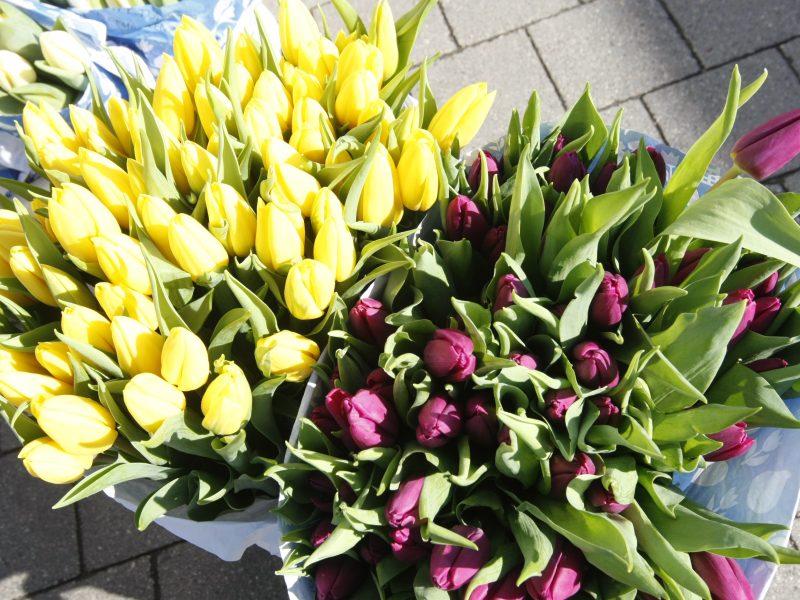 Motinos diena uostamiestyje – be gėlių?