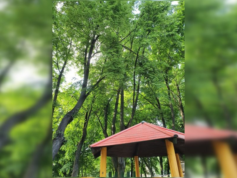 Klaipėdiečiai su baime kelia akis: pavojų kelia medžių šakos