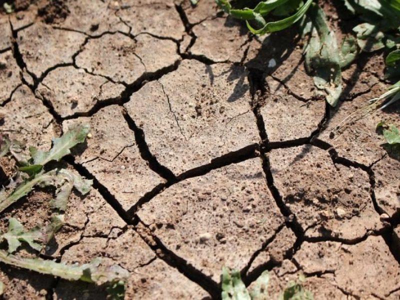 Skaudžios besitraukiančios sausros pasekmės: žemdirbiai neteko trečdalio derliaus