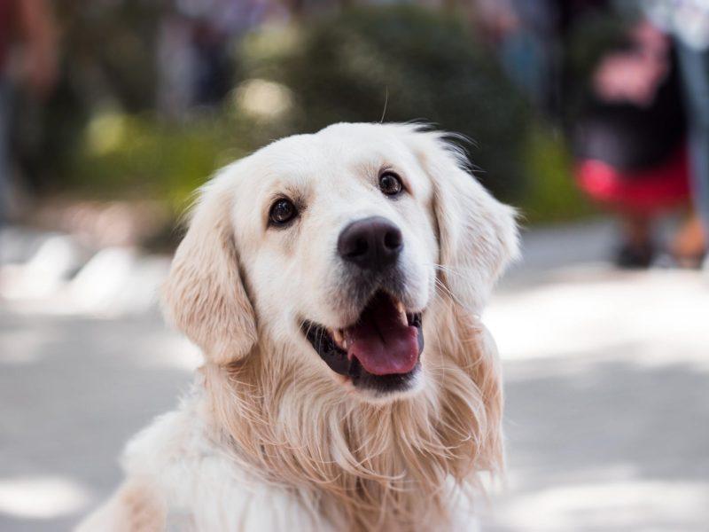 Kokias klaidas daro šunų augintojai? Specialistų patarimai