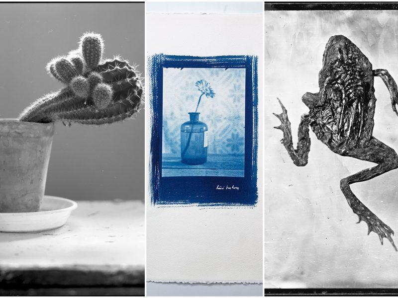 Klaipėdos parodų rūmuose – G. Kavoliūno fotografijų paroda