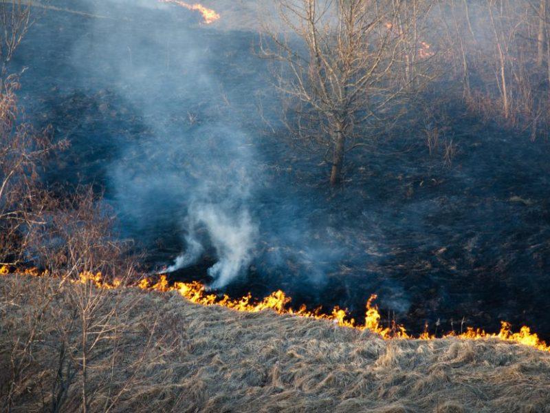 Miškų urėdija įspėja: žolės deginimas – pagrindinė miško gaisrų priežastis