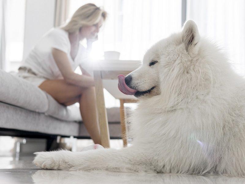 Kaimynų akiratyje – bute auginami du šunys: pirmiausia nervino lojimas, vėliau – net vaikščiojimas