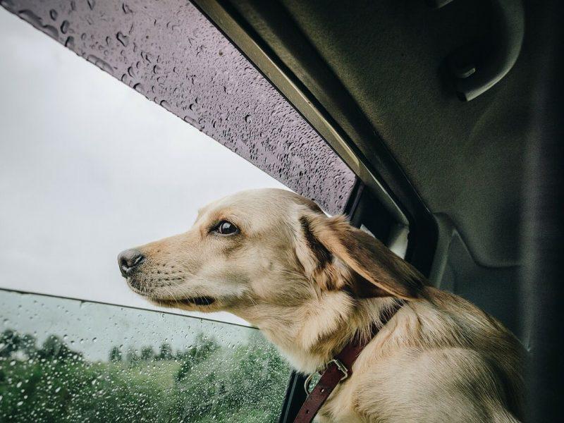 Sinoptikai: po jaukių savaitgalio orų į šalį ims plaukti lietaus debesys