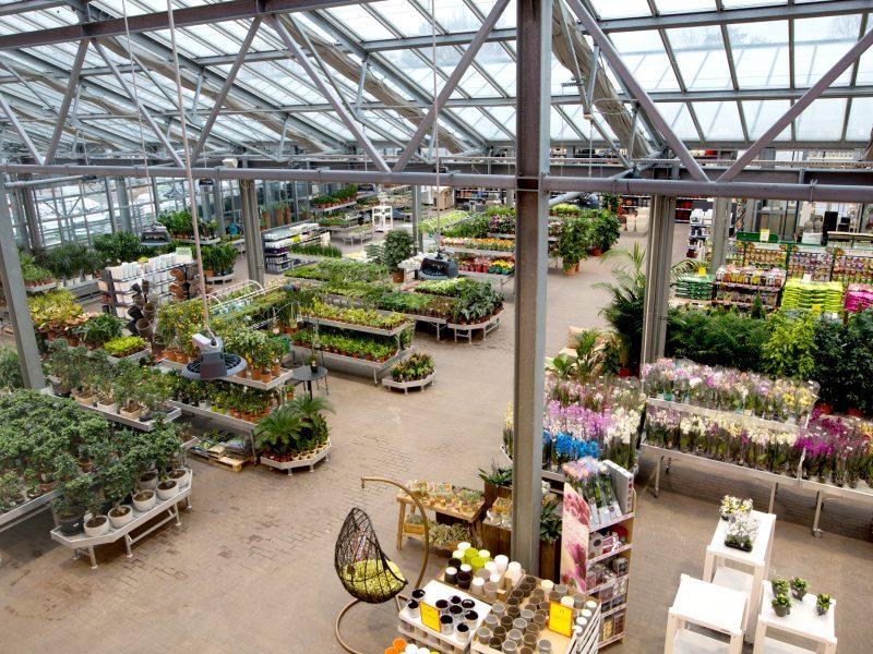 """Pavasarį """"Senukai"""" pasitinka atnaujinta oranžerija: siūloma įspūdinga augalų įvairovė"""