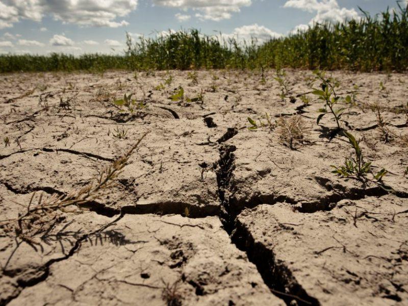 Sausra laukuose: blogiausia bulvėms ir salotoms, grūdininkai – optimistiškesni