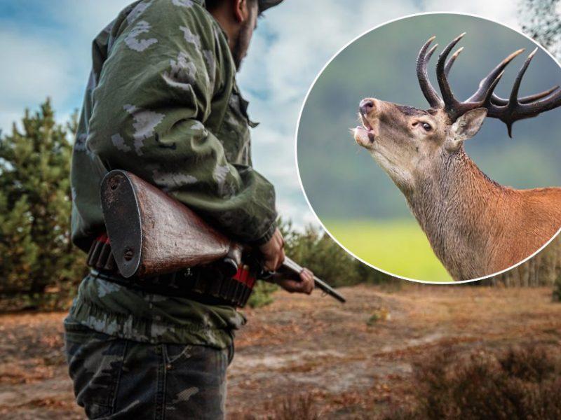 Medžioklėje, kurioje neteisėtai nušautas elnias, dalyvavęs policijos pareigūnas atleistas