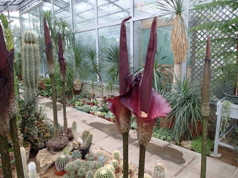 Meilės dieną Botanikos sode pražydo egzotikos mėgėjus traukiantys augalai