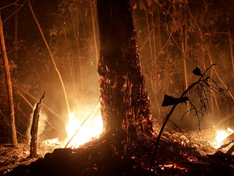 Popiežius nerimauja dėl Amazonijos miškų