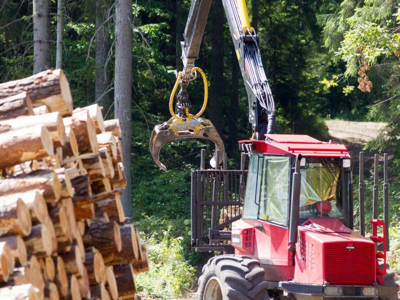 Teismas iš naujo spręs ginčą dėl padidintos miškų kirtimo normos