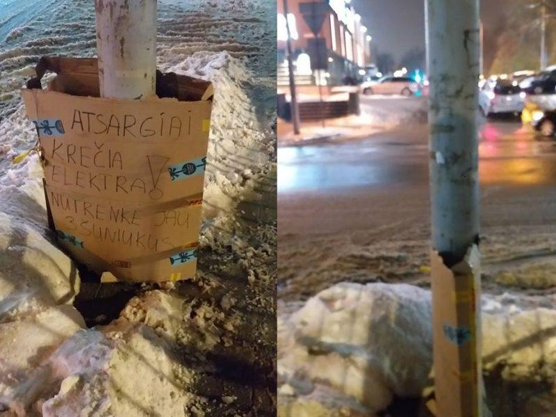Perspėja dėl pavojingo stulpo Vilniuje: vieną šunį elektra jau nukrėtė mirtinai