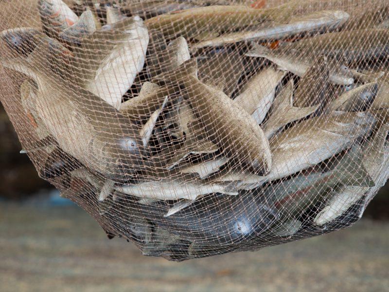 Visuomenė nepritaria verslinės žvejybos plėtrai ežeruose