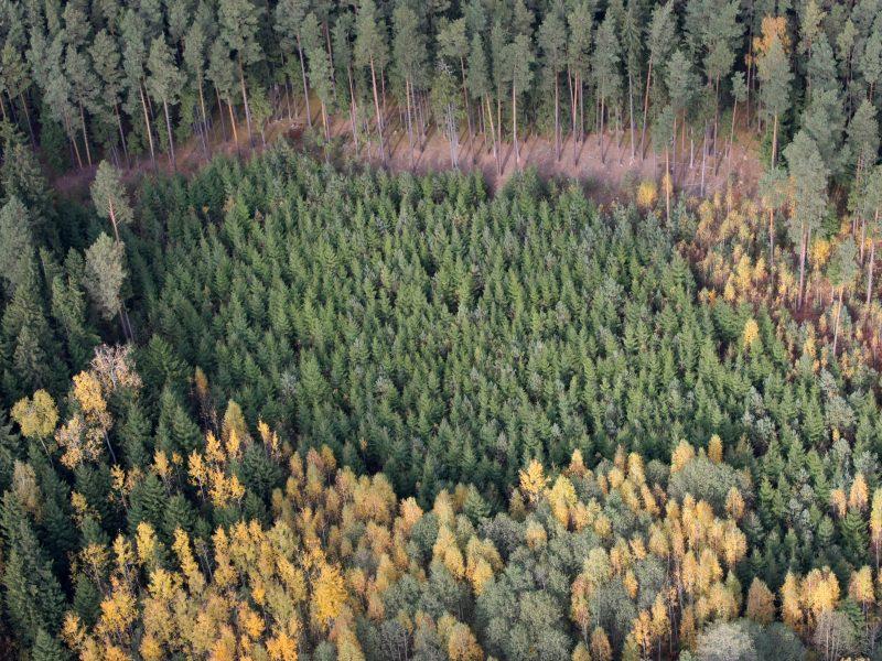 Žadama griežtinti medžių kirtimo tvarką vertinguose miškuose