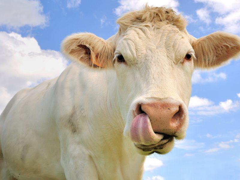 Įdomieji 2020-ųjų turto areštai: nuo veislinių karvių iki senovinių automoblių