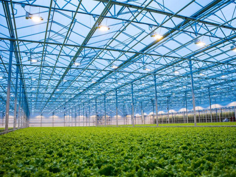 Lietuviškomis daržovėmis šalies gyventojai galės mėgautis visus metus