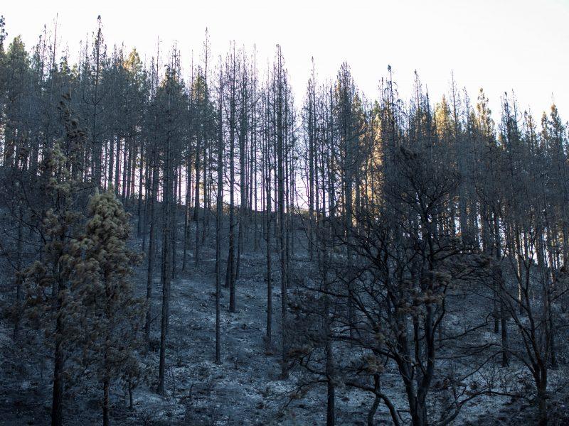 Nuslopinus miško gaisrą gyventojams Gran Kanarijoje leista grįžti į namus
