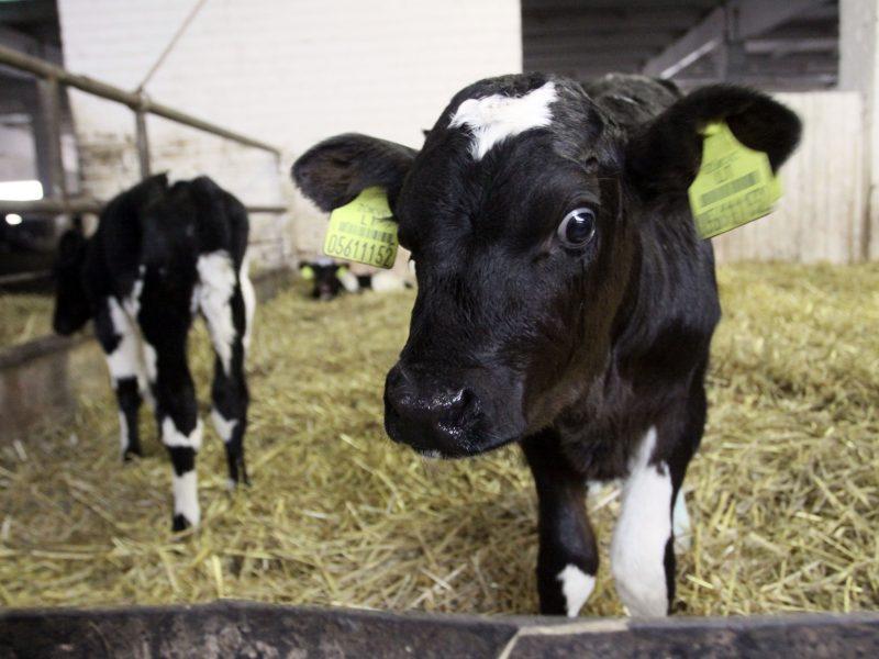 ES institucijos raginamos ruošti pieno sektoriaus gelbėjimo planus