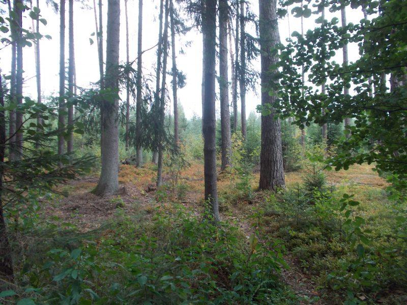 Dalyje Lietuvos – aukščiausias miškų gaisringumo pavojus