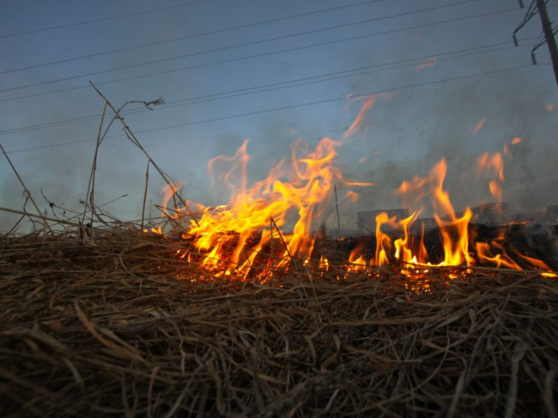 Žolės deginimo rizika: iš ugnies gniaužtų jau išgelbėtos kelios gyvybės